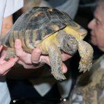 Schildkröte Otto